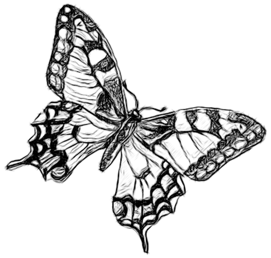 Line Drawing Butterfly : Butterfly line drawing clipart best