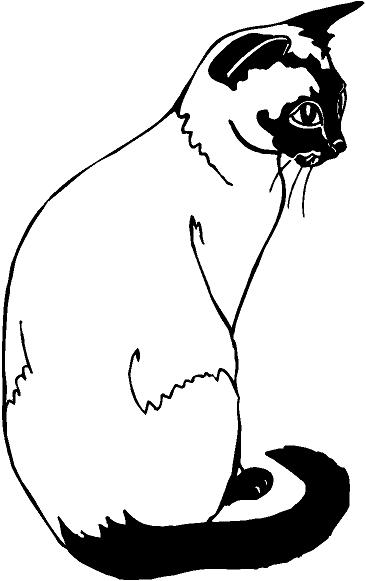 siamese cat drawings clipart best
