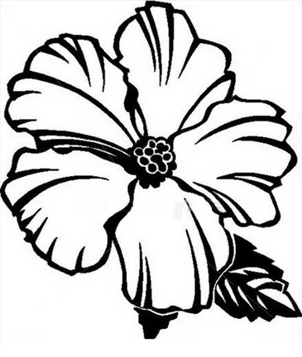 free printable hawaiian flowers coloring pages educational excellent - Flower Color Pages