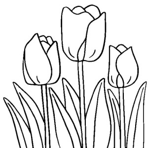 Tulip Line Drawing