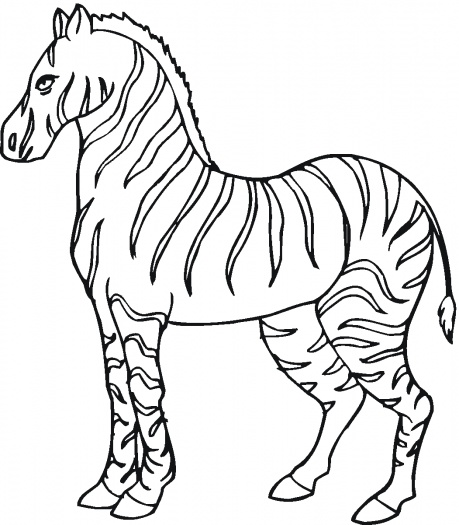 zebra outline drawing - photo #22