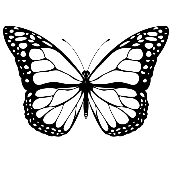 Butterfly Outline Template - ClipArt Best