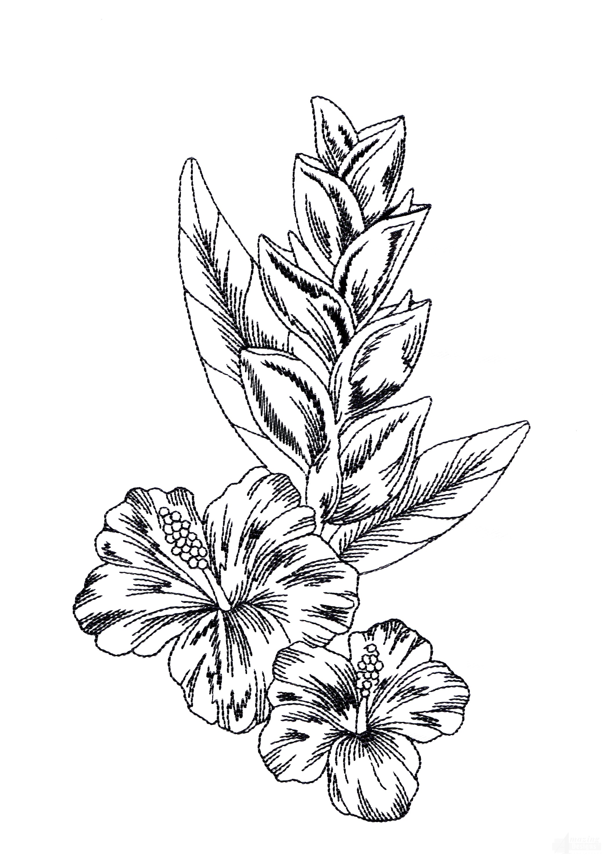 Tropical Flower Line Drawing : Tropical flower drawing clipart best
