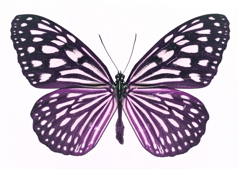 cartoon butterfly wing clipart best