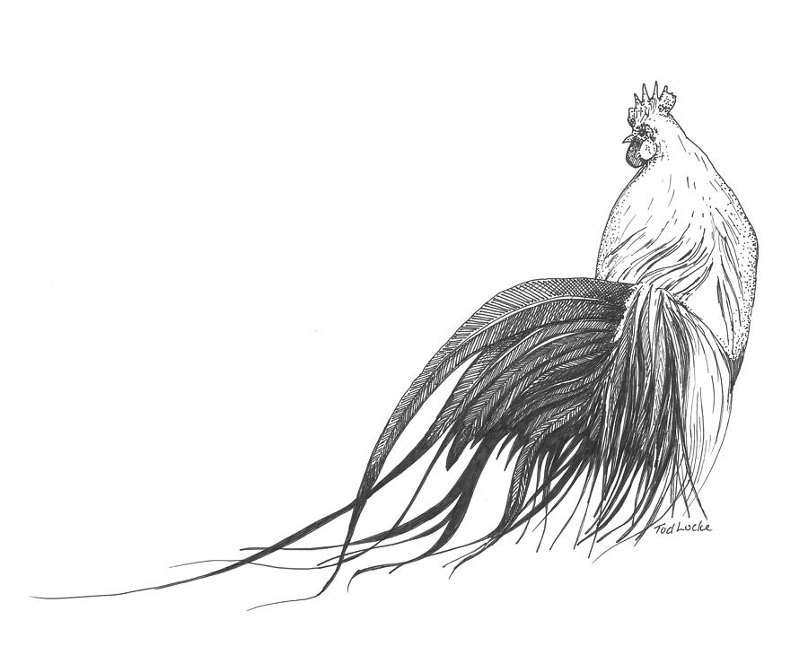 Line Drawing Rooster : Rooster drawing clipart best