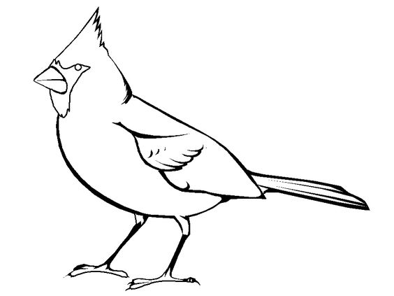 chickadee bird coloring pages - photo#16
