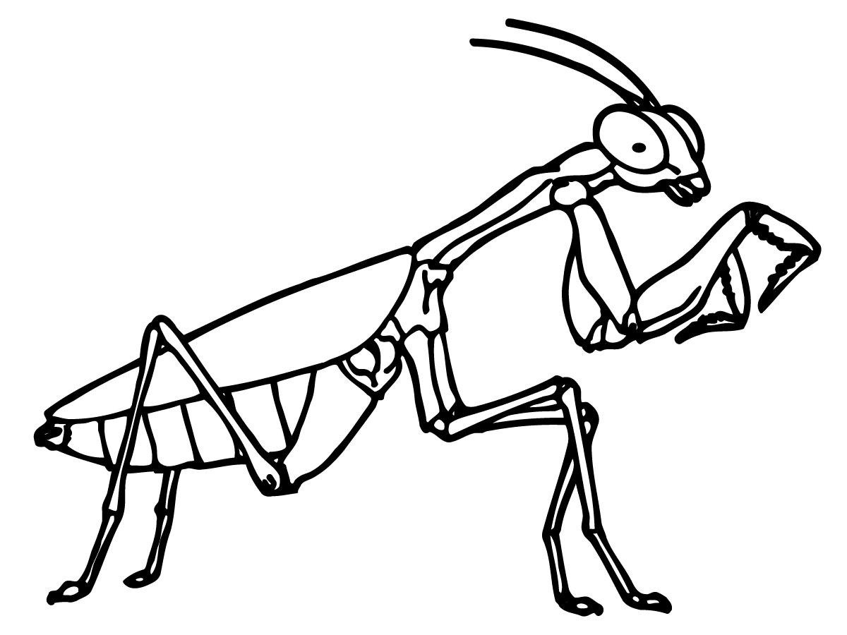 coloring pages locust - photo#18