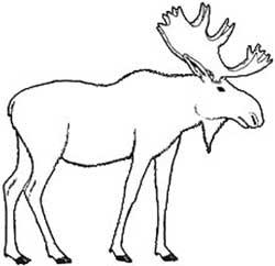 Moose Clip Art - ClipArt Best