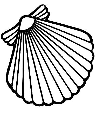 Best Photos of Scallop Coloring Page - Scallop Shell Coloring Page ...