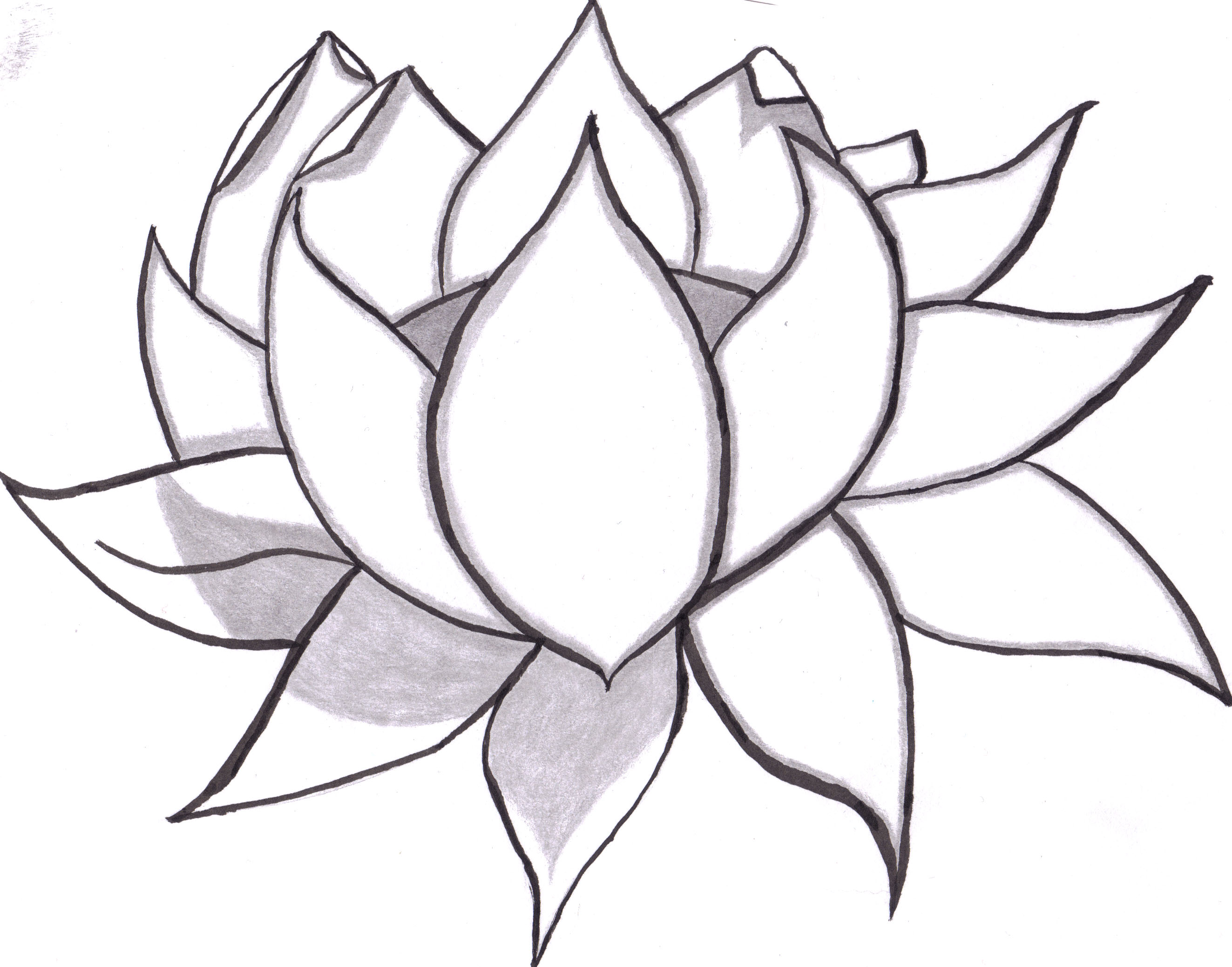 lotus flower drawing sketch clipart best