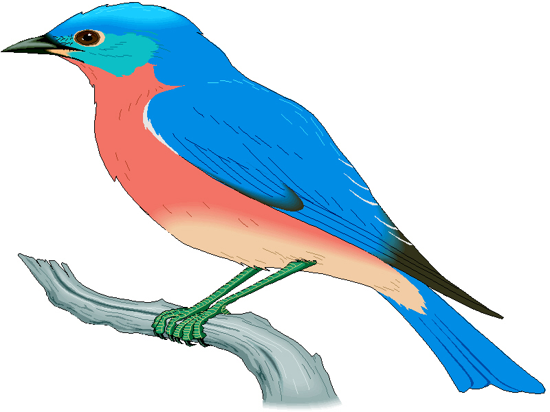 Drawings Of Bluebirds - ClipArt Best