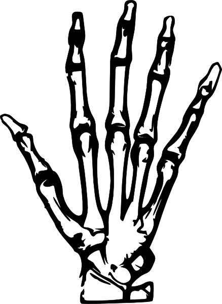 Hand x Ray Clip Art Vector