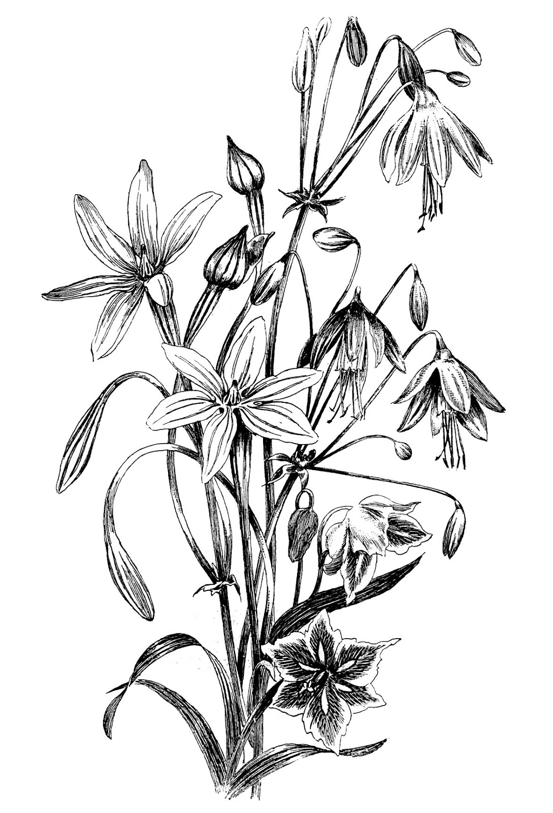 Beautiful Flower Line Drawing : Victorian flower drawings clipart best