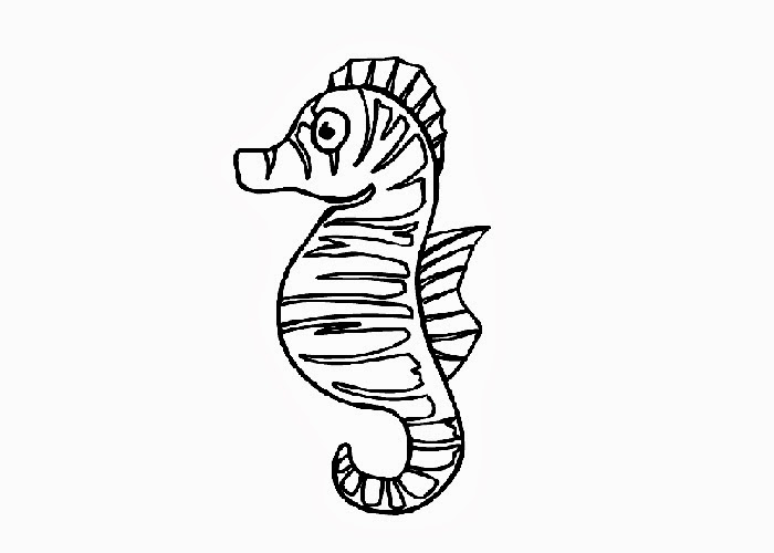 seahorse coloring page clipart best