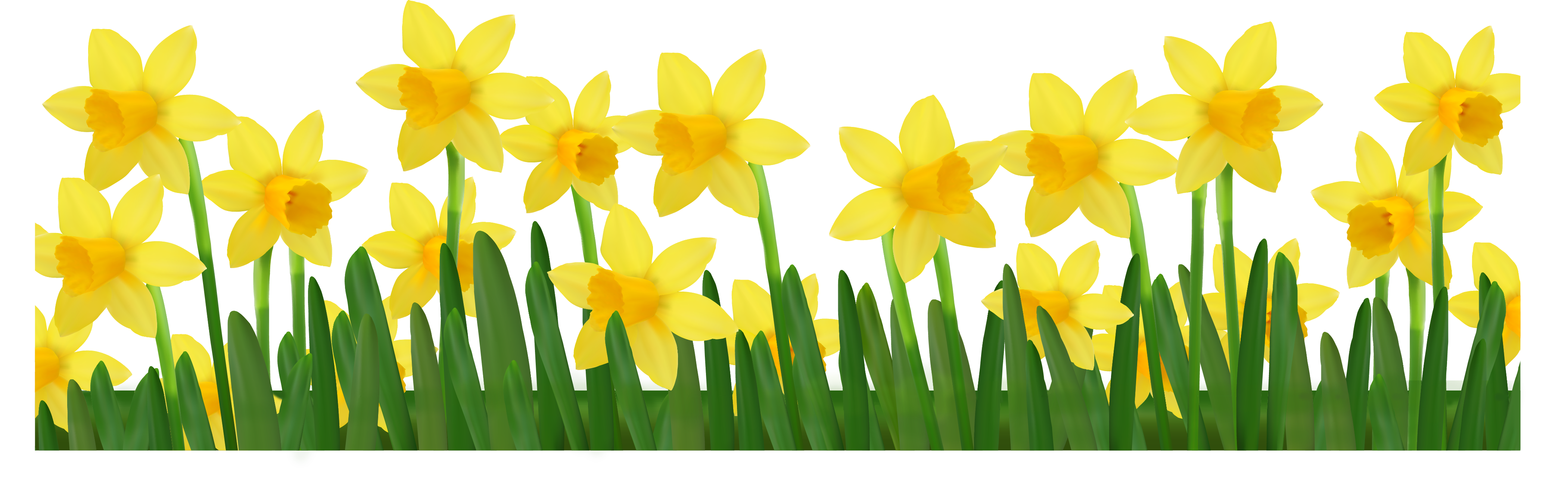 Images Of Daffodils - ClipArt Best