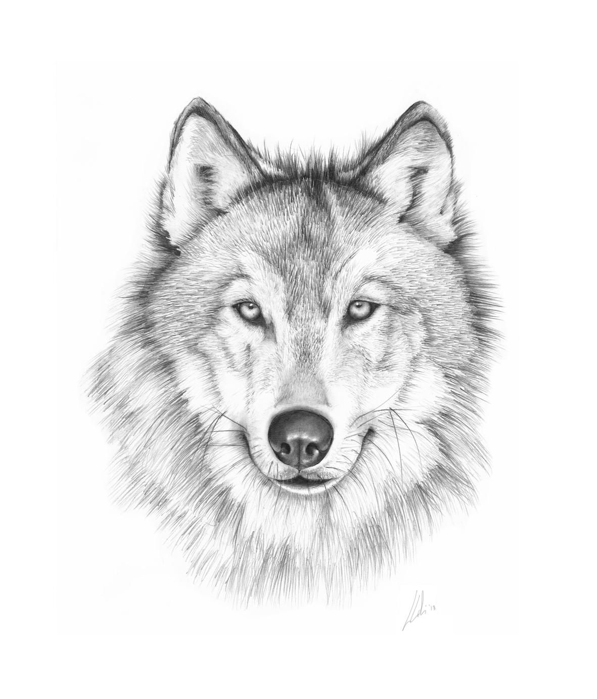 Amazing Wolf: Amazing Wolf Drawing
