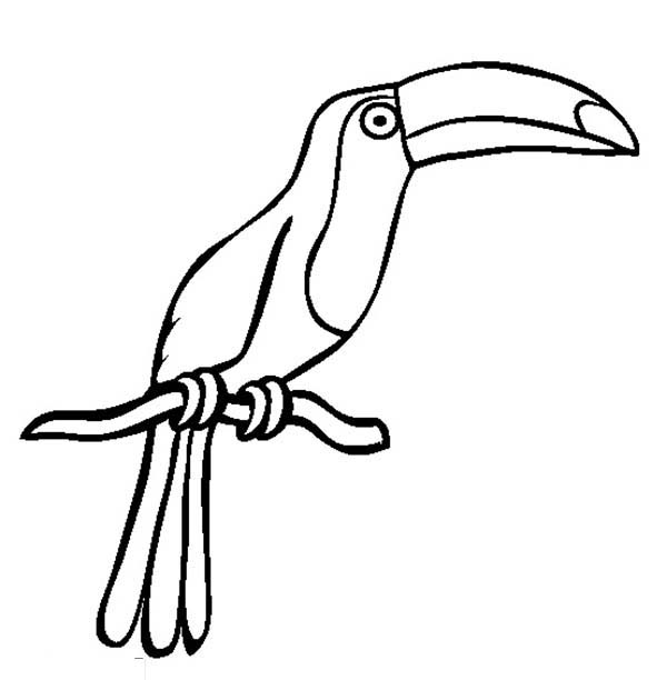 Toucan Coloring Page #2