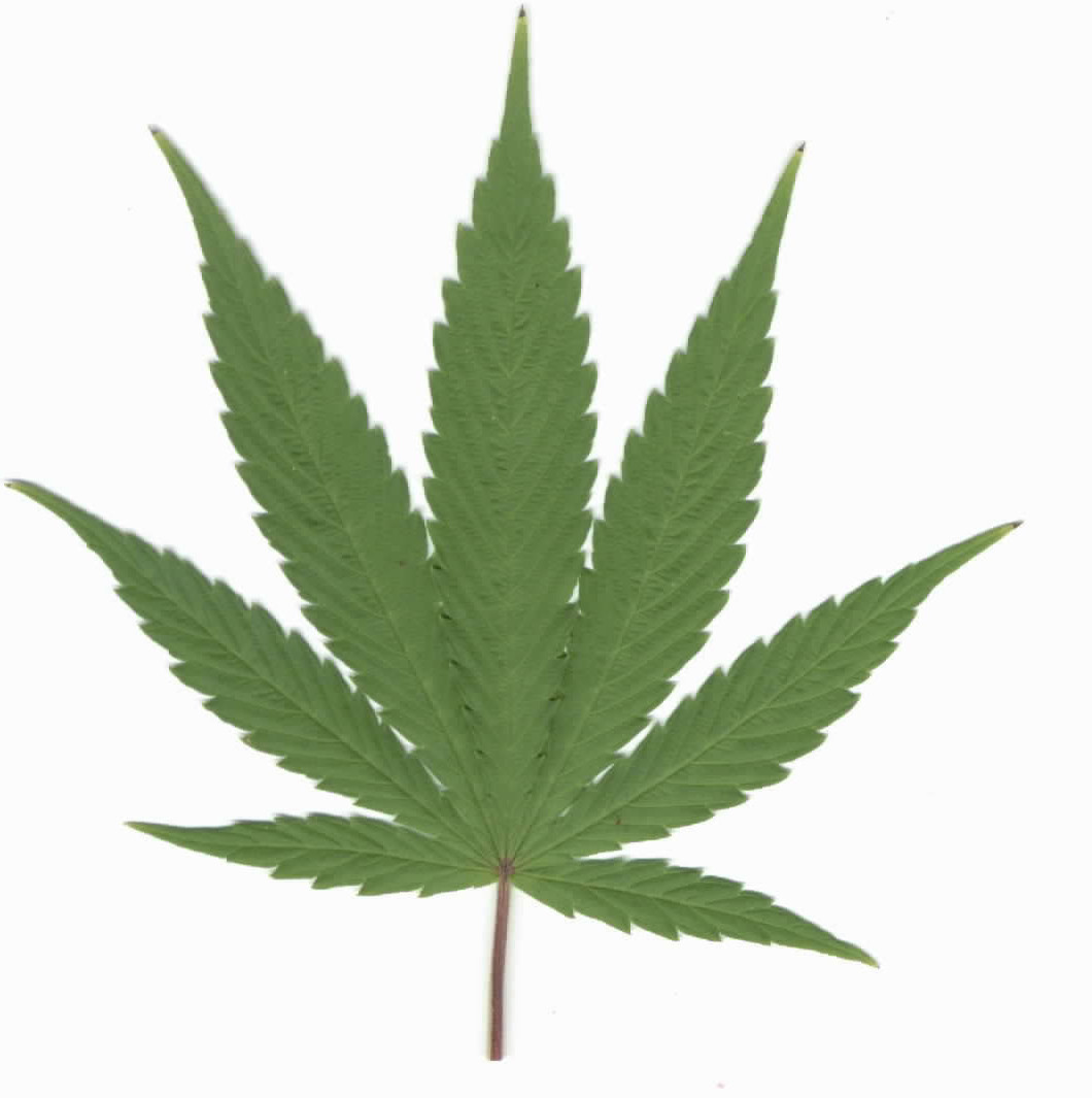 Outline Of A Weed Plant - ClipArt Best