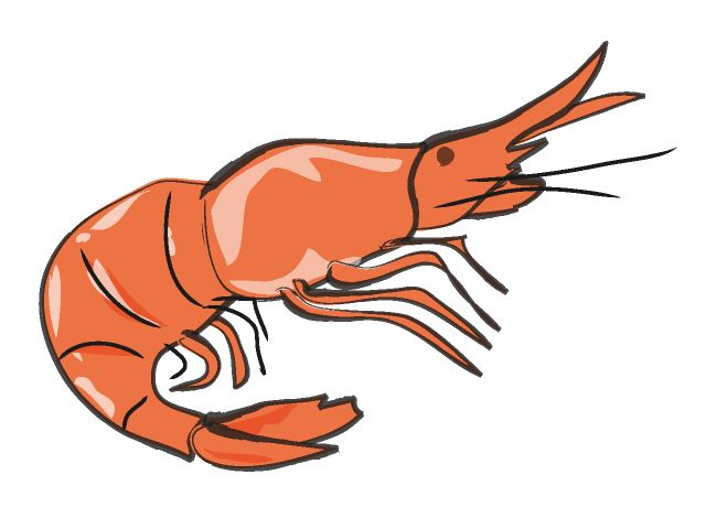 Clip Art Shrimp Clipart shrimp clip art clipart best pictures