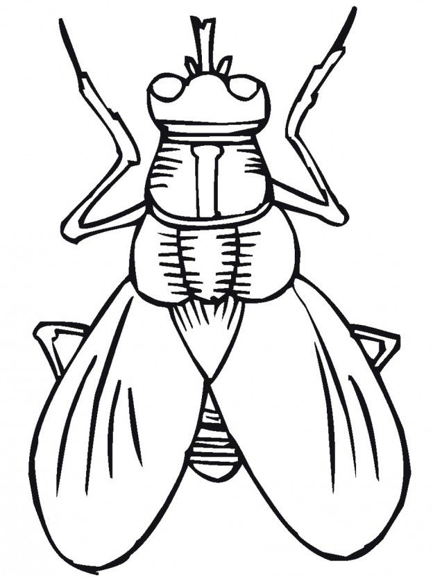 template coloring pages