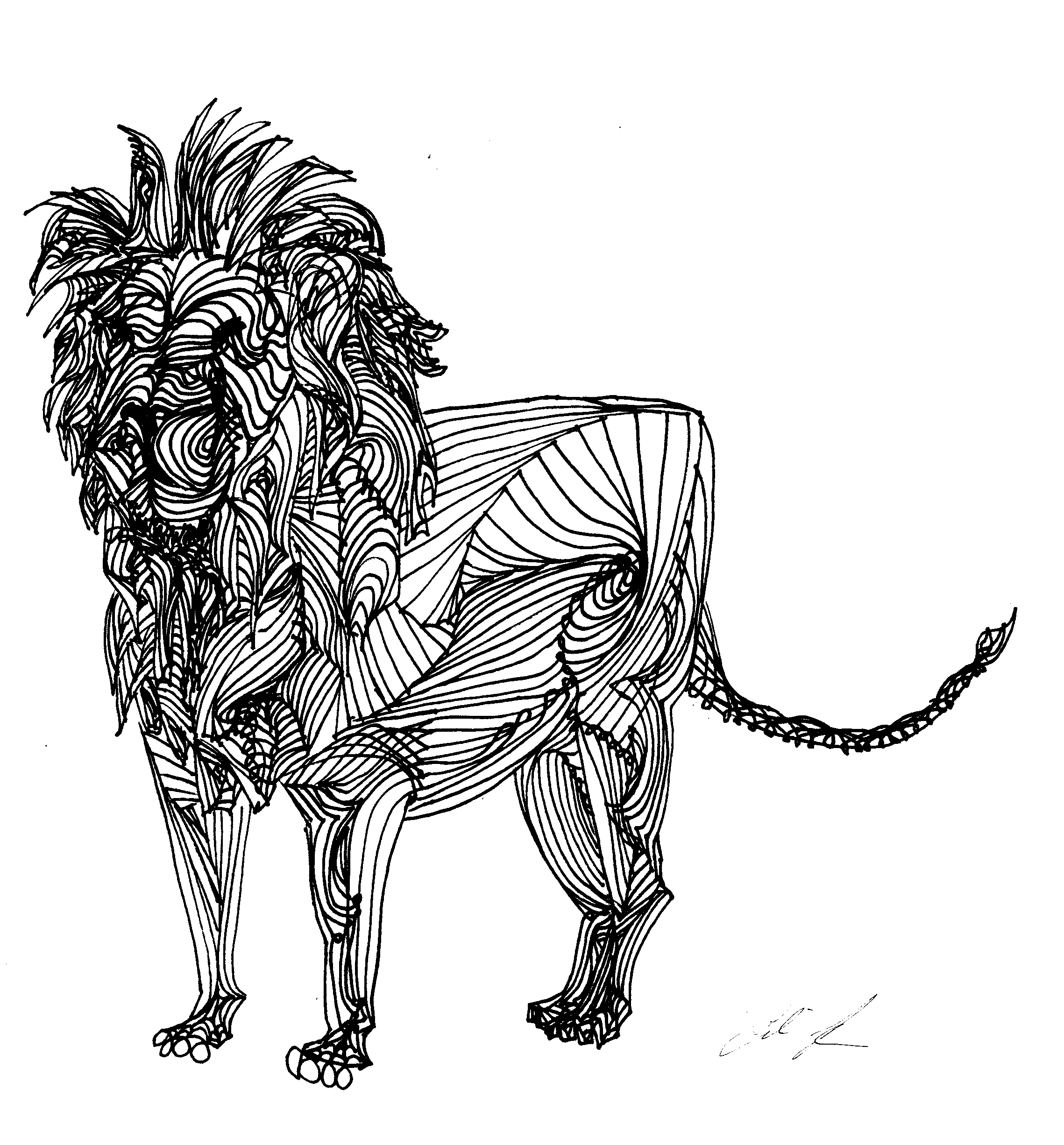 Line Art Clipart : Lion line drawing clipart best