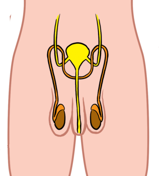 Female Reproductive System Blank Diagram - ClipArt Best