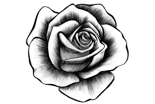 Rose Sketch Black And White ClipArt Best
