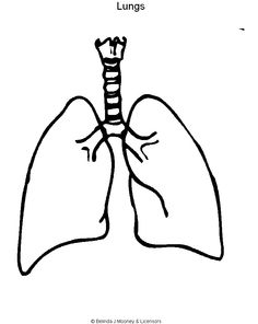 Blank Lung Diagram - ClipArt Best