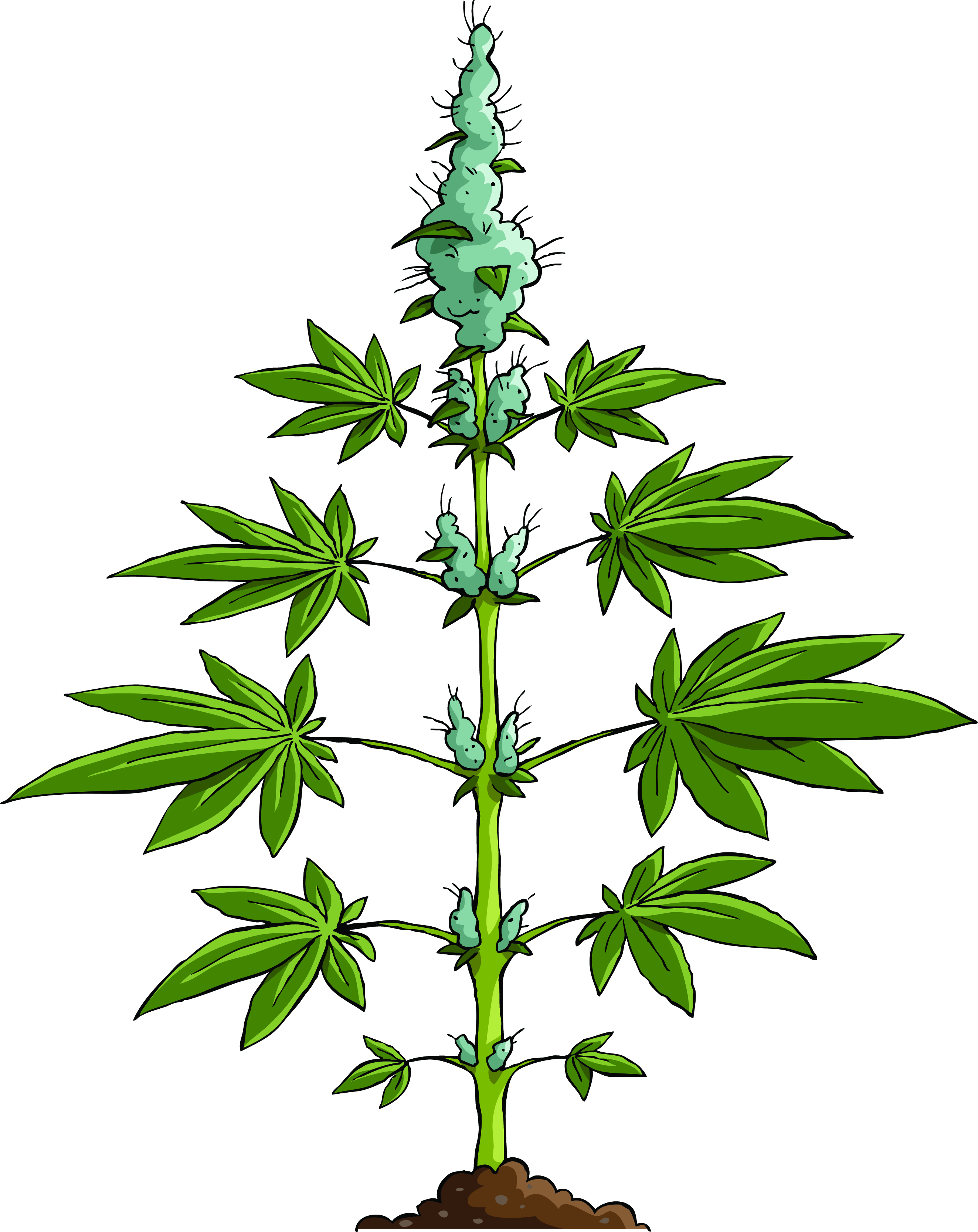 Free Weed Plant Drawing, Download Free Clip Art, Free Clip ... |Weed Plant Drawings