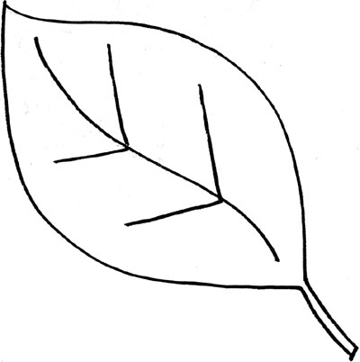 leaf outline template clipart best