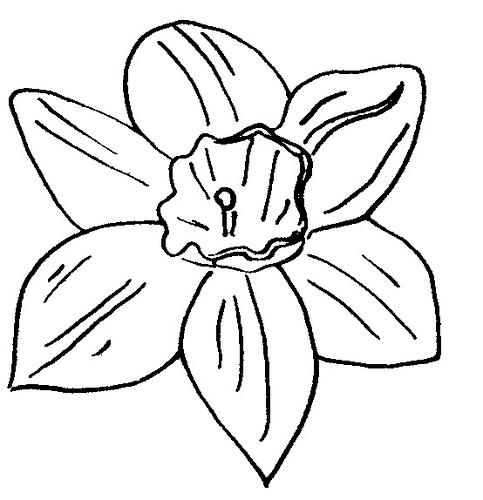 Line Drawing Daffodil : Daffodil line drawing clipart best