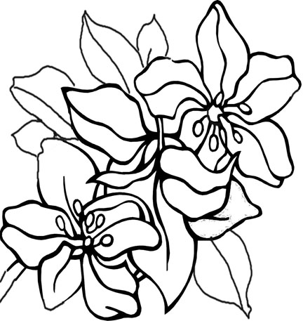 flower printables clipart best