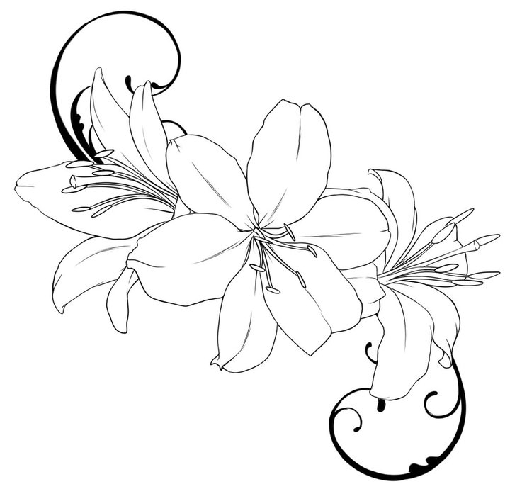 Lily Tattoo Line Drawing : Lily flower tattoo ideas clipart best