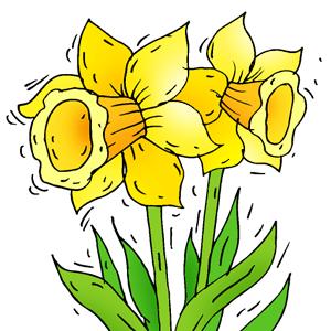 Daffodil Art - ClipArt Best