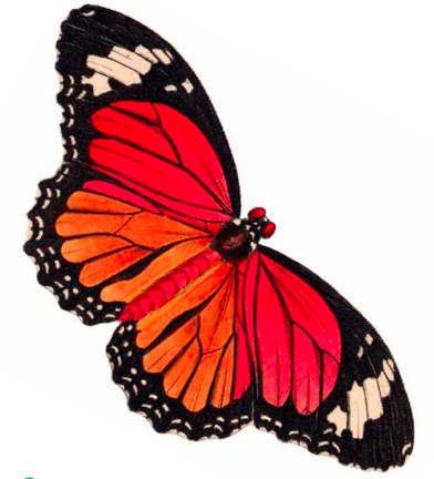 Butterfly Clip Art Free Download - ClipArt Best