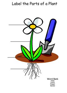 math worksheet : parts of plants worksheet  clipart best : Parts Of A Plant Worksheet Kindergarten