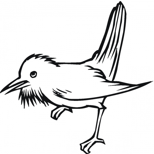 Baby Puffin Birds Cartoon ClipArt Best