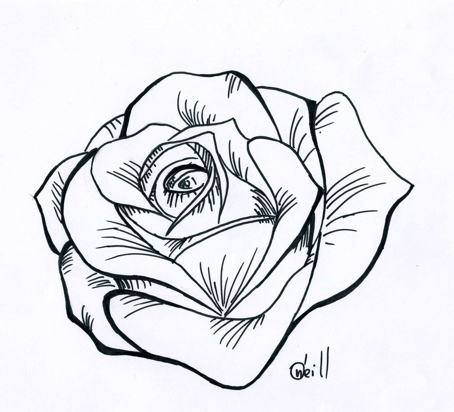 Line Drawing Of A Rose : Rose line drawings clipart best