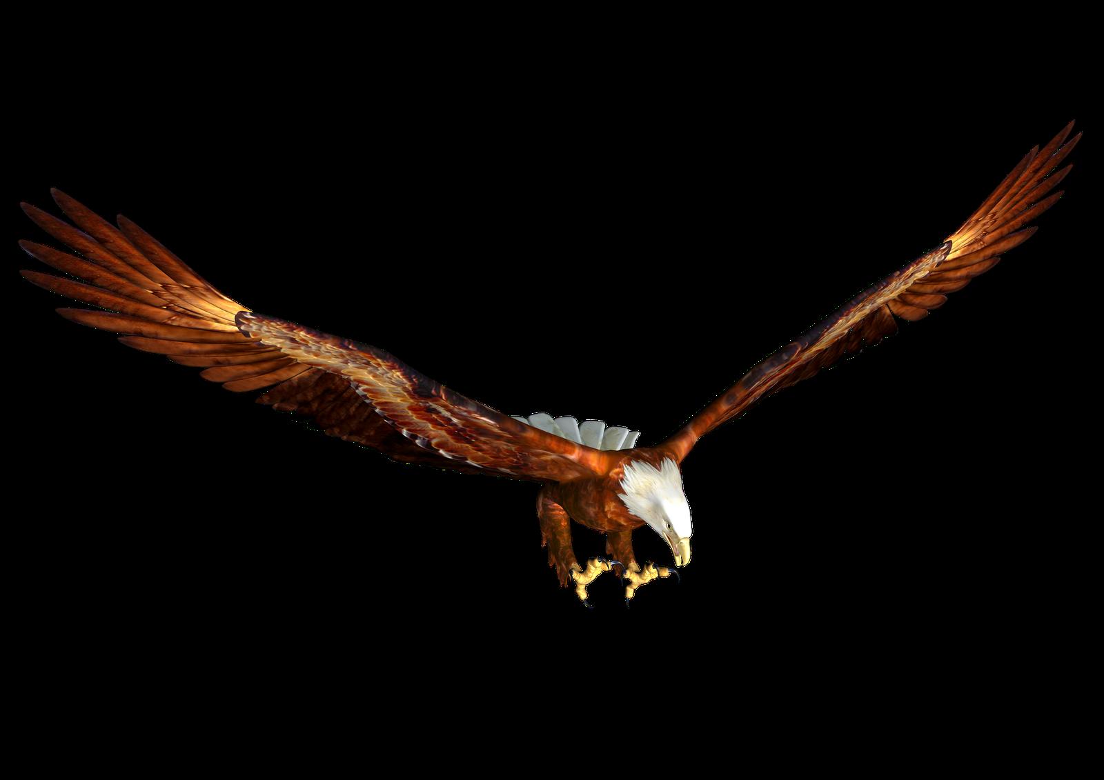clip art soaring eagle - photo #20