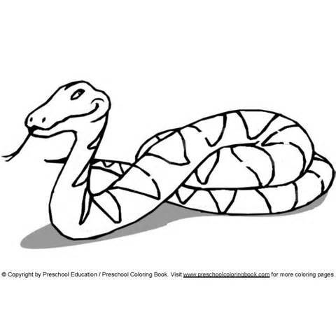 Green Anaconda Drawings ClipArt Best
