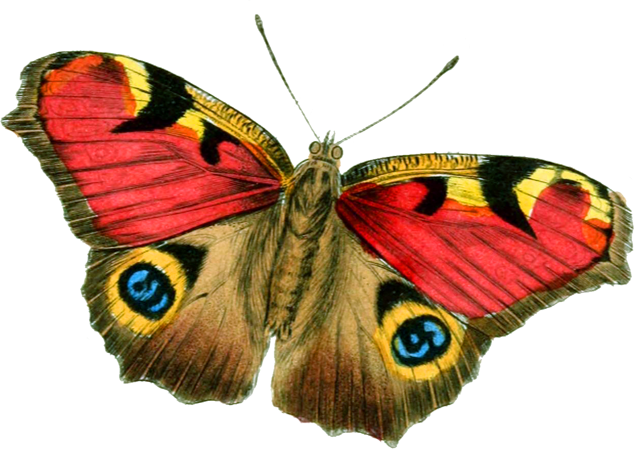 Download PNG image: Butterfly PNG image - ClipArt Best - ClipArt Best