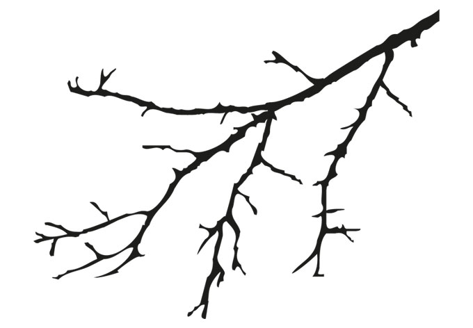 Tree Branches Coloring Pages