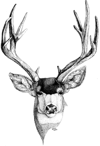Hirschkopf together with Mule Deer Head Decal 2 additionally Stag Head Drawing further Cerf Tribal Style Vecteur Illustration 8631927 further How To Draw A German Shepherd Step By Step For Beginners Artbest. on deer head clipart