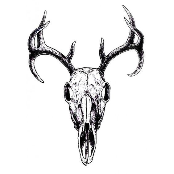 Deer Skull Outline - ClipArt Best