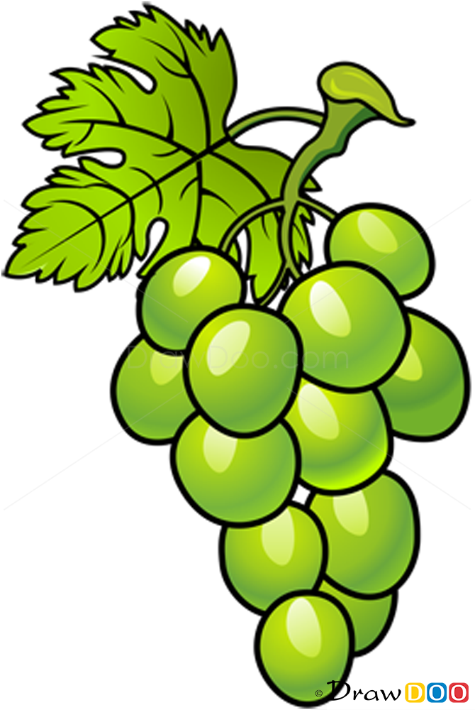 Grapes Drawing - ClipArt Best