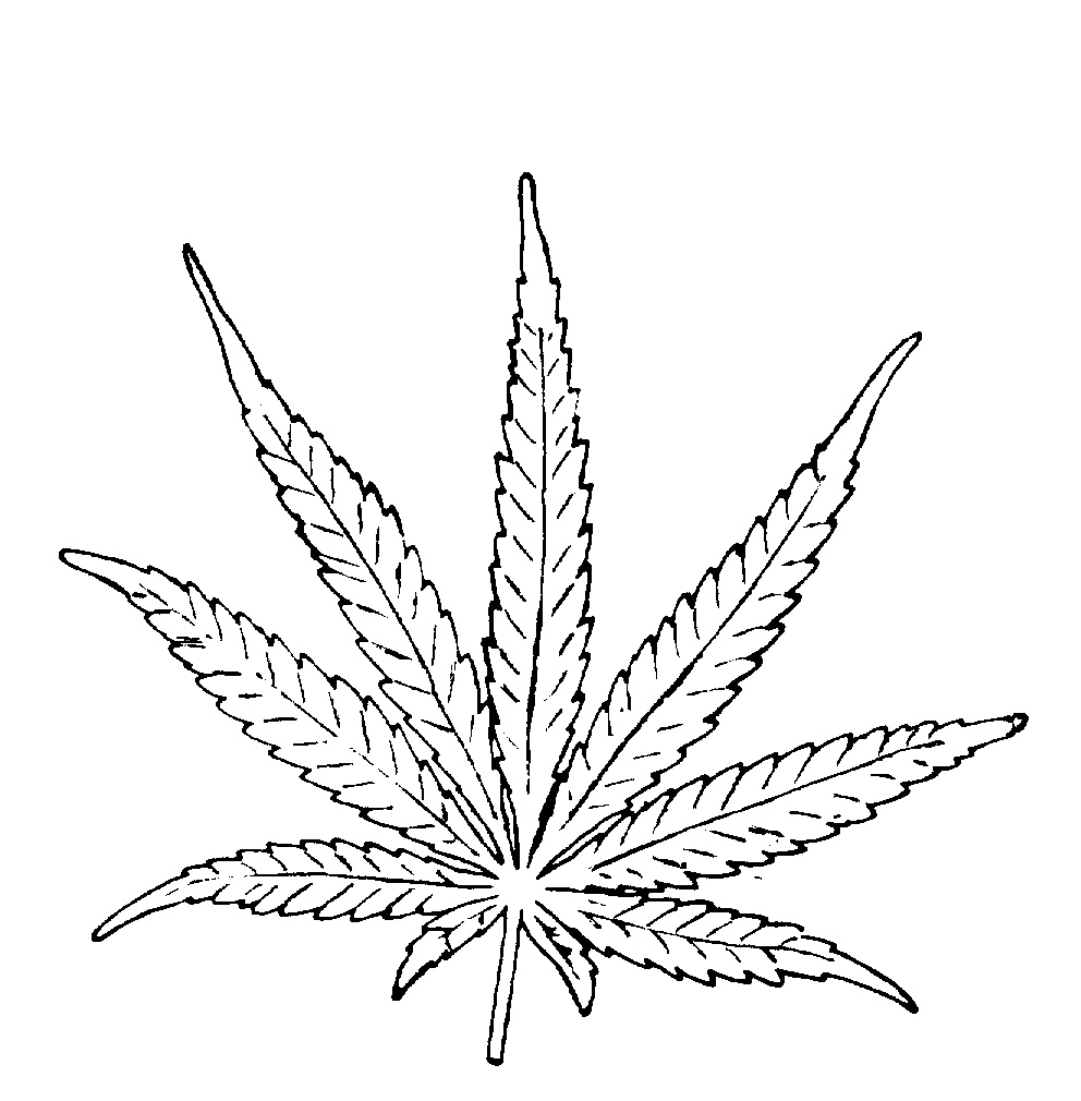 Black And White Marijuana Drawing - 155.1KB