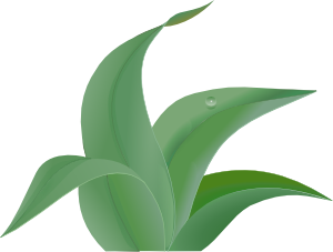 Tropical Leaf Template Clipart Best
