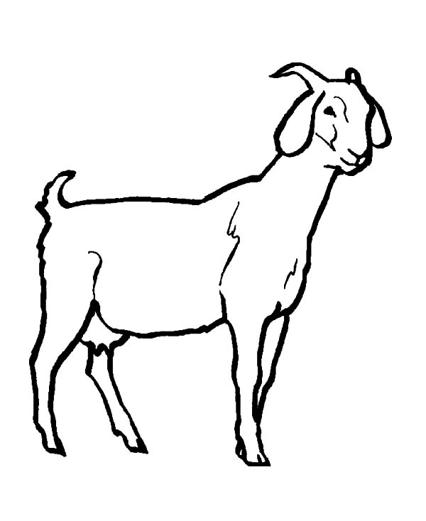Nubian Goat Coloring Pages www.imgkid.com The Image Kid Has It!