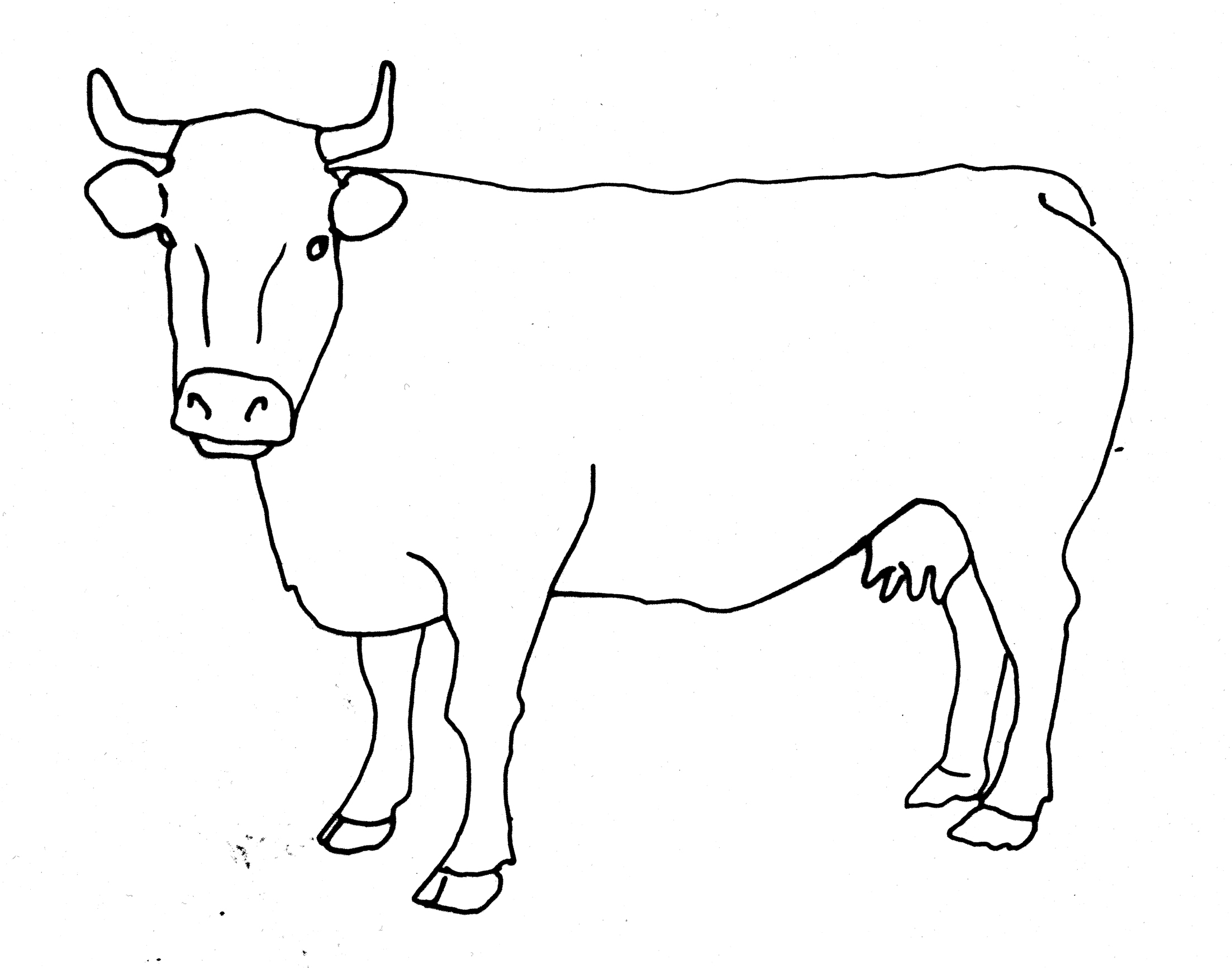 Line Art On Photo : Cow line drawing