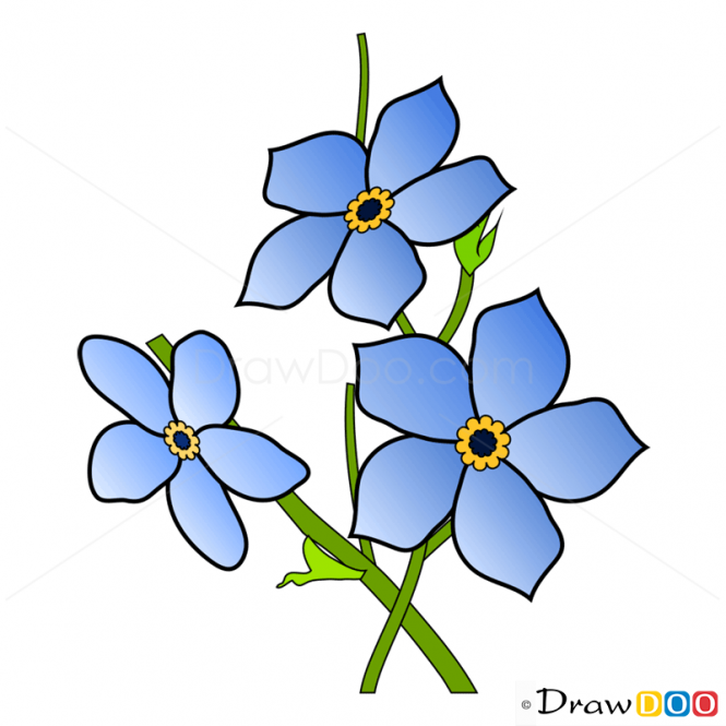 clip art forget me not flower - photo #42